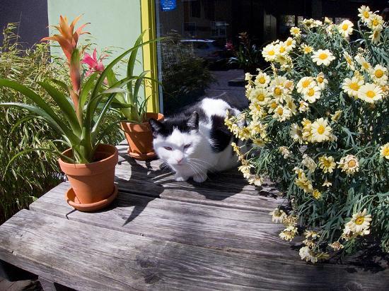 Lieve Nachten B&B: Always beautiful flowers adorn Lieve Nachten…plus a cat or two!