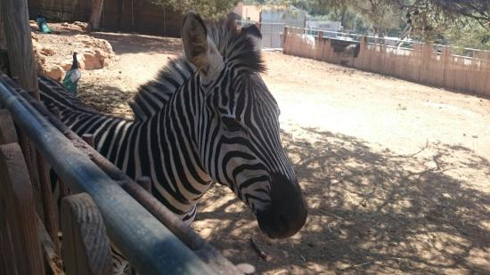 Santa Eugenia, Espagne : Animals in the zoo