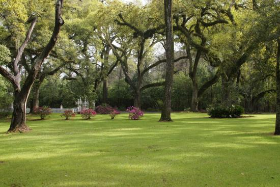 The Myrtles Plantation: acres Live Oak trees