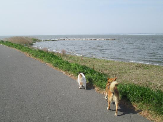 Inashiki, Japan: 霞ケ浦の堤防