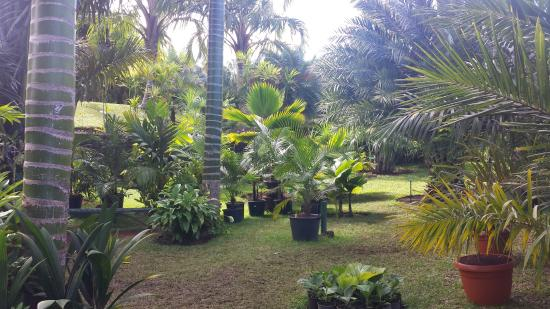 Parc des Palmiers : jeunes plantes en pots
