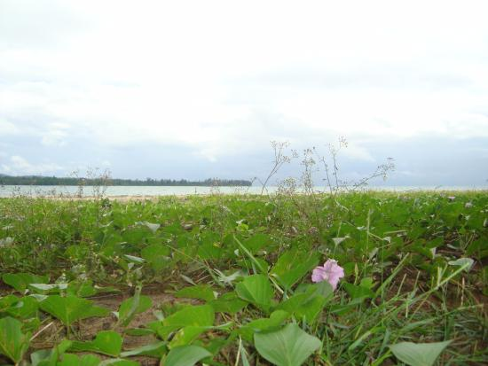 Seram Island, Indonesia: Pantai Gumamae terletak di Kota Bula Kabupaten Seram Bagian Timur