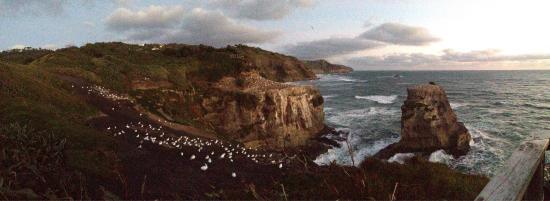 Muriwai Beach, Nueva Zelanda: photo0.jpg