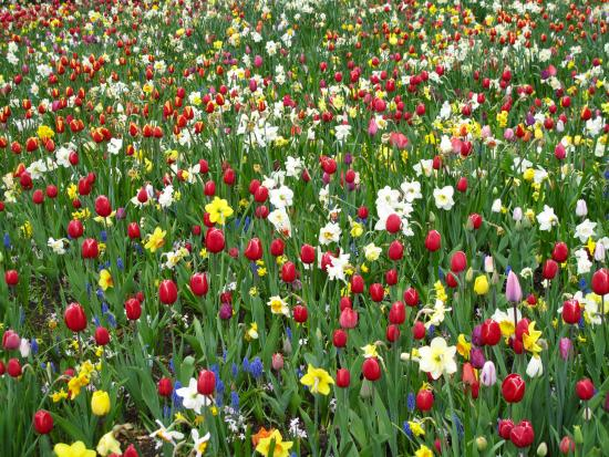 Floralia - Spring Flower Show: Bed of mixed Flowers