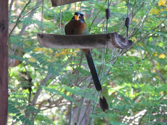 Carpe Diem Villa: bird feeding at feeder