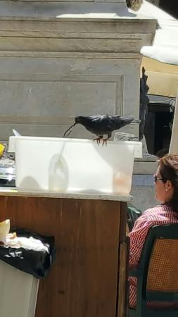 Good for pigeons