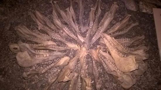 Bohol National Museum: Ossements, mâchoires