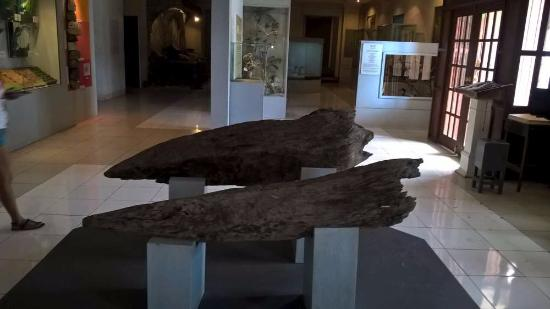 Bohol National Museum: Exposition