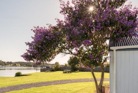 Northland Region, New Zealand: Waitangi Holiday Park Grounds
