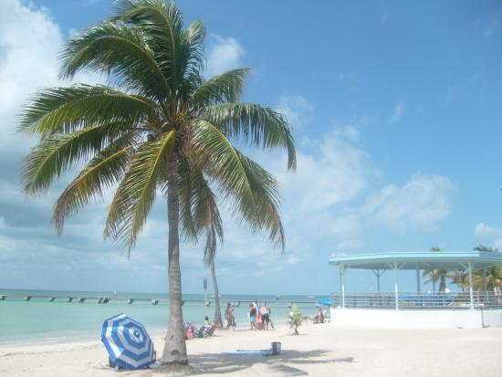 higgs beach picture of higgs beach key west tripadvisor rh tripadvisor co nz