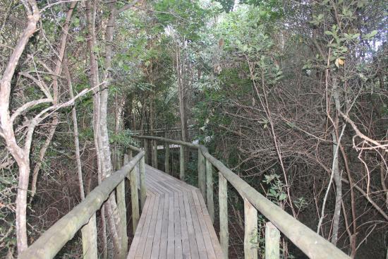 Tsala Treetop Lodge Photo