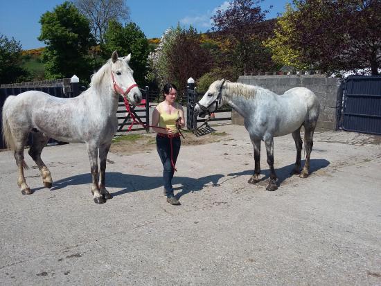 Ballyhoura Horse Trekking