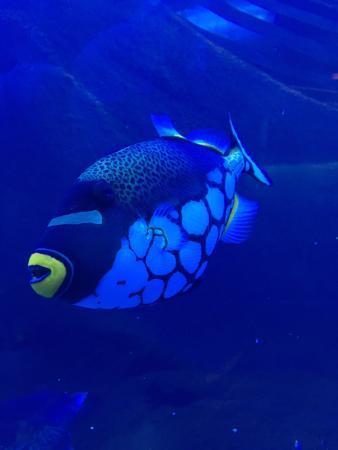 Downtown Aquarium: photo3.jpg