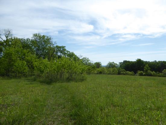 Leesburg, VA: Meadow