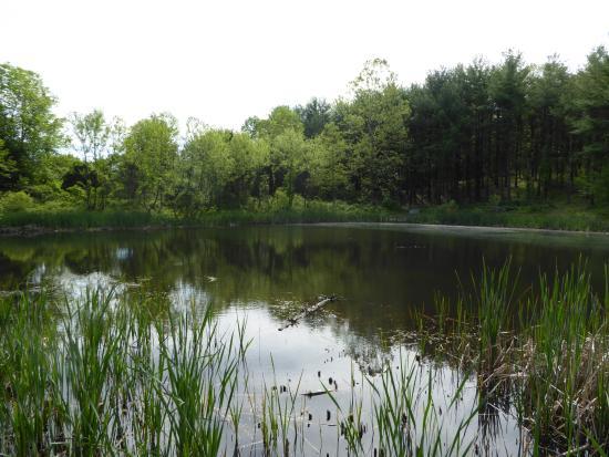 Leesburg, VA: Pond