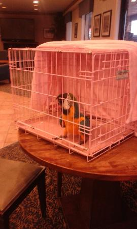 Plim Plaza Hotel: Parrot in lobby and our ocean front room