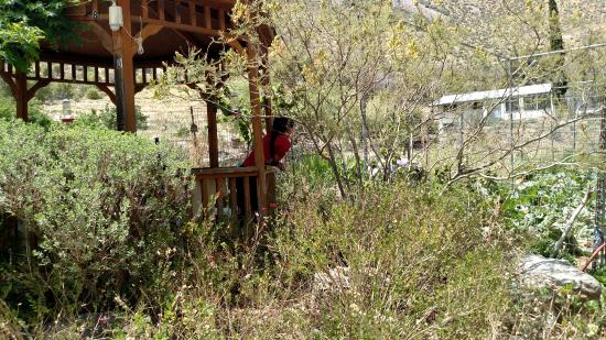 Beatty's Miller Canyon Apiary & Orchard: lunch time at the ranch