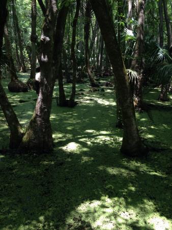 Sebring, FL: photo8.jpg
