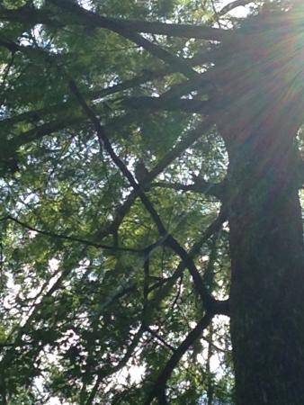 Sebring, FL: A walk through the hammock and the cypress swamp.