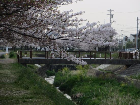Taketoyo-cho, Japón: v石川の写真
