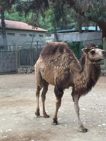 Kale İçi - Picture of Antalya Zoo, Antalya - TripAdvisor