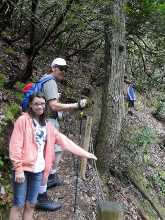 Lakemont, GA: trail narrows