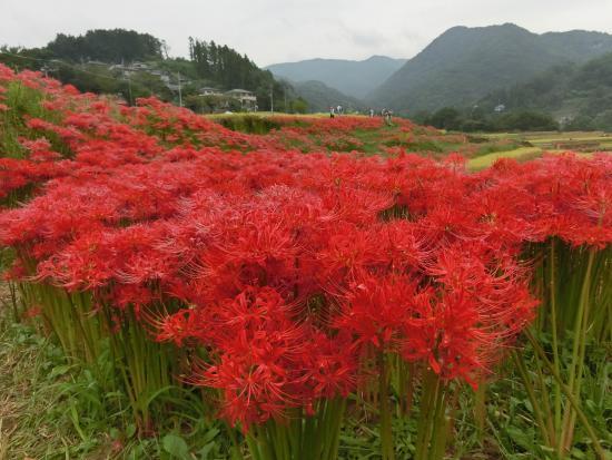 Yokoze-machi Photo