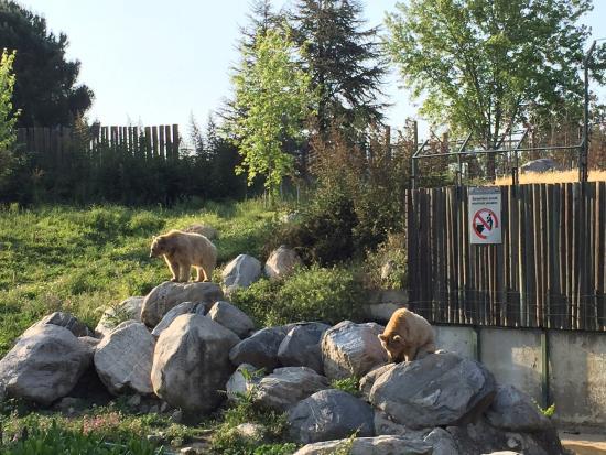 photo5.jpg - Bursa Zoo, Bursa Resmi - TripAdvisor