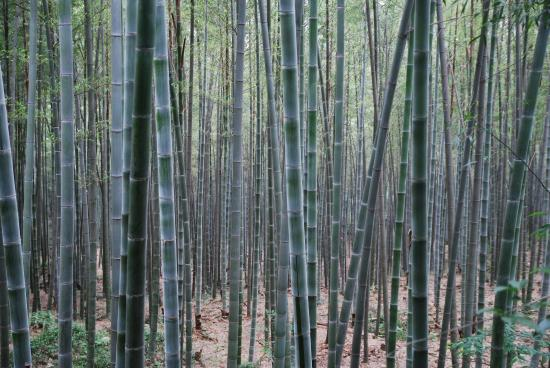 Bambuswald Auf Dem Weg Nach Oben Picture Of Sheshan Catholic