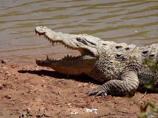 La Petite Cote, Senegal: Lui aussi semble avoir faim...
