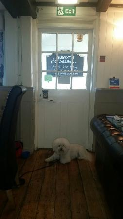 White lion pub: Dog friendly.. ❤
