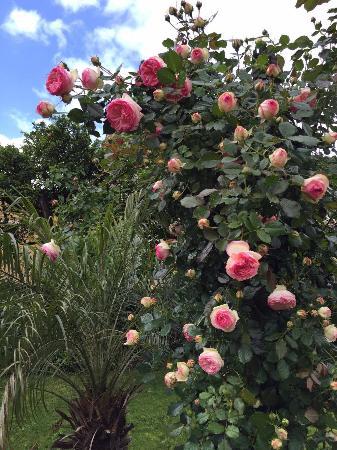 Sant'Agnello, Italia: roseto