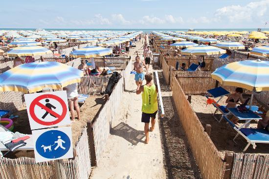 Rimini Dog No Problem - la dog beach del Bagno 81 di Rimini ...
