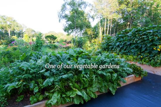 Lincolnville, ME: Another vegetable garden