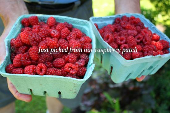 Lincolnville, ME: Just picked from our raspberry patch