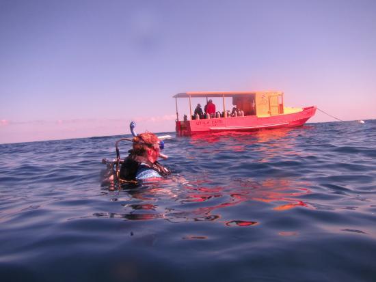 Utila, Honduras: In the water