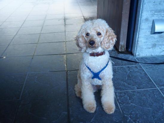Arcana Izu: アルカナイズの愛犬