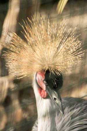 El Rincon de las Aves