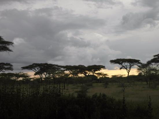 Ndutu Safari Lodge: evening at Ndutu Lodge