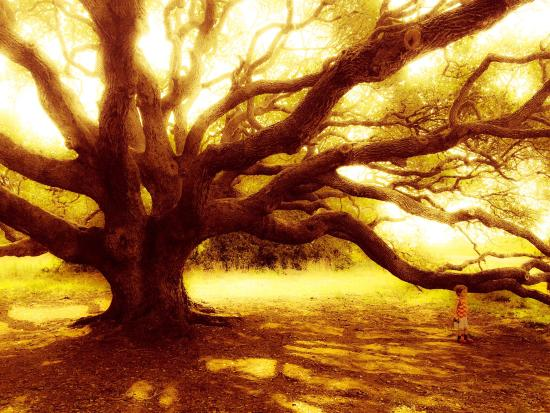 Rockport, TX: The big tree and the neighboring trees are amazing. Can take some really cool pictures with thes