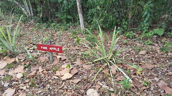 Unitedville, Belize: 20160513_112241_large.jpg