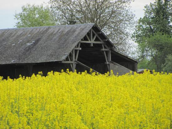 Clamecy, Fransa: C'était la saison du Colza, et une ancienne grange typique.