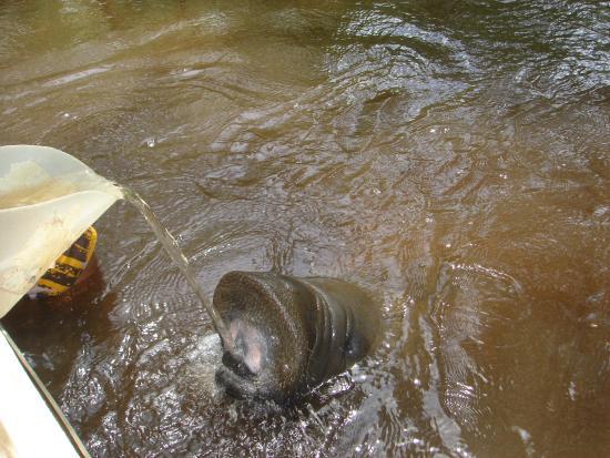 State of Alagoas: Interação com Peixe Boi