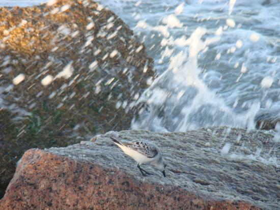 Surfside Beach, TX: Jetties