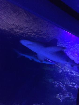 Downtown Aquarium: photo0.jpg