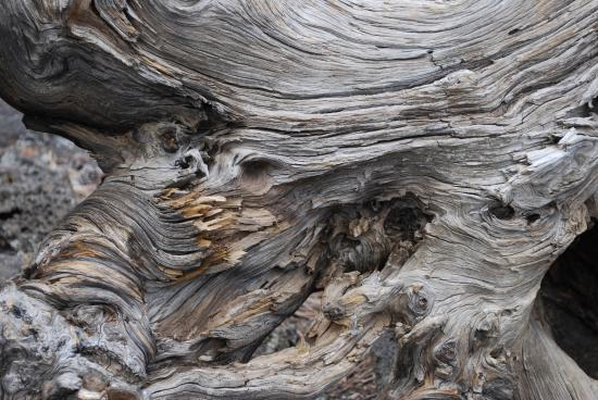 Grants, Nowy Meksyk: Twisted tree stump