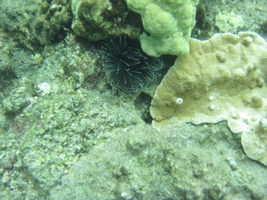 Pahoa, Hawái: Kapoho Tide Pools