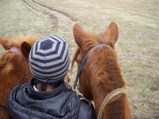 Jeju Tourist Horse Riding