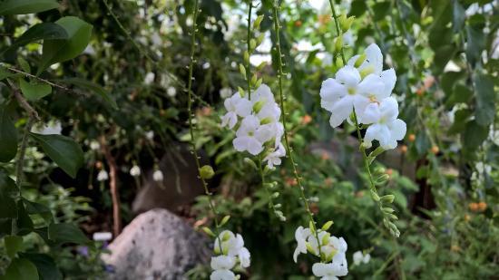 Western Colorado Botanical Gardens: do not know