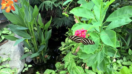 Western Colorado Botanical Gardens: Zebra butterfly